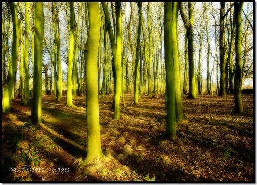 Winter-Woodland-Glow