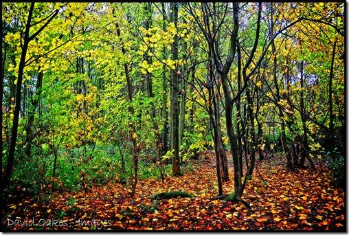 Rain-Woods-1