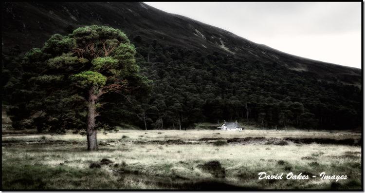 Pine-in-the-Glen