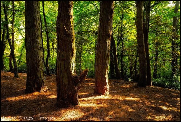 3-Pines-1