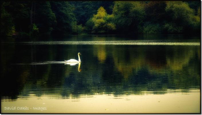 Swan-at-Dusk3