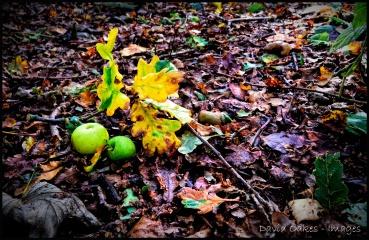 Oak-and-Apple