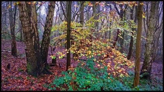 Woodland-Mist-1-copy