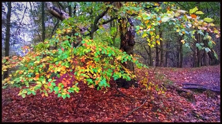 Woodland-Mist-3-copy