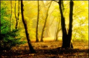 Yellow-Morning