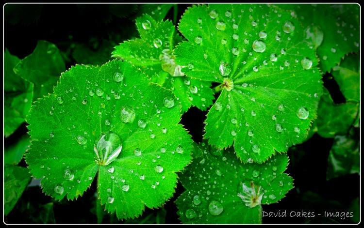 More-rain-drops