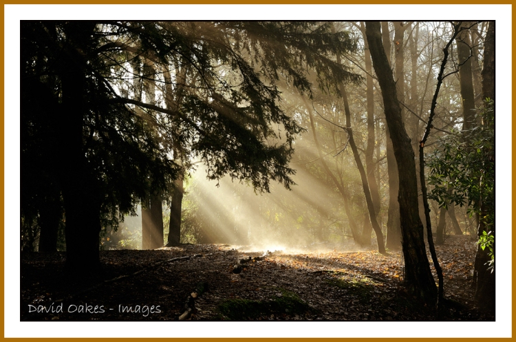 Allestree-Woods