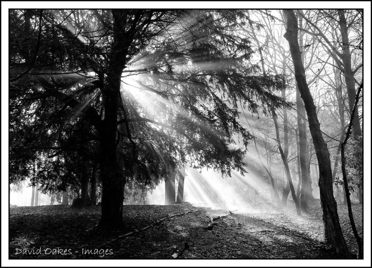 Woodland-Morning