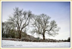 Ash-in-Snow