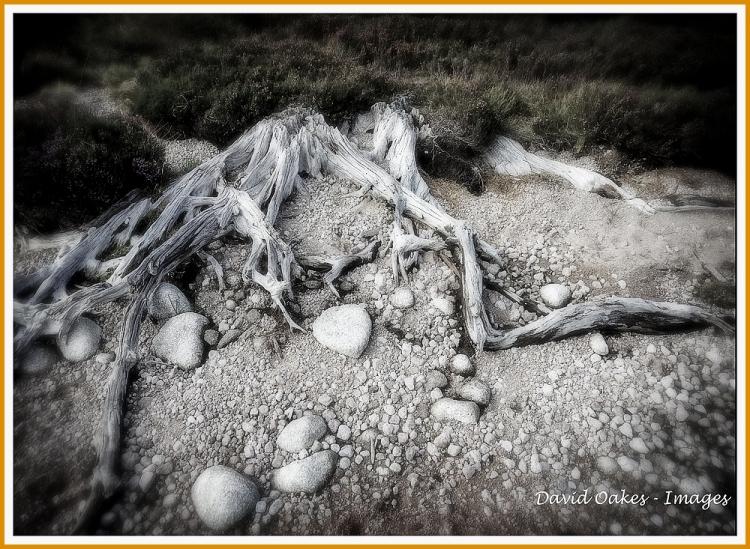 Weathered-Wood bwt