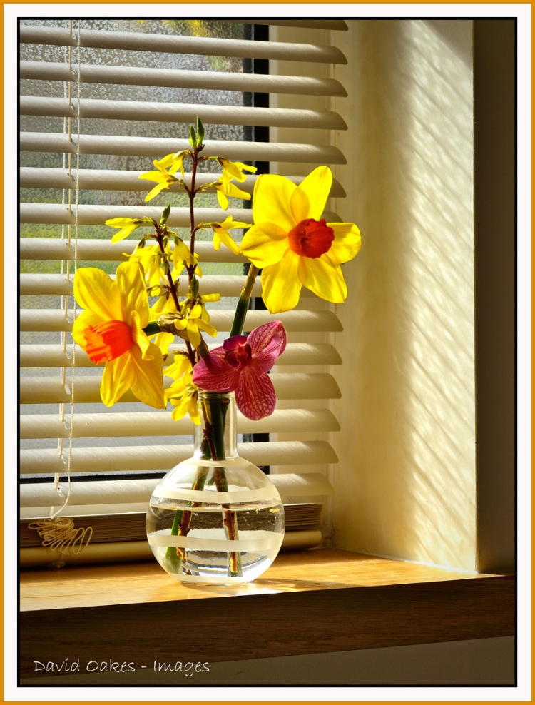 Window-Daffs-1