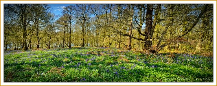 Spring-Wood