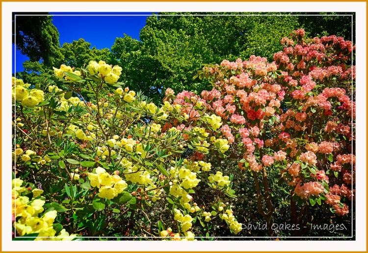 Lea-Gardens--04161