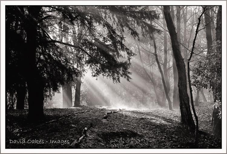 Autumn-Mists bw