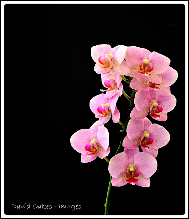 Orchid-Time