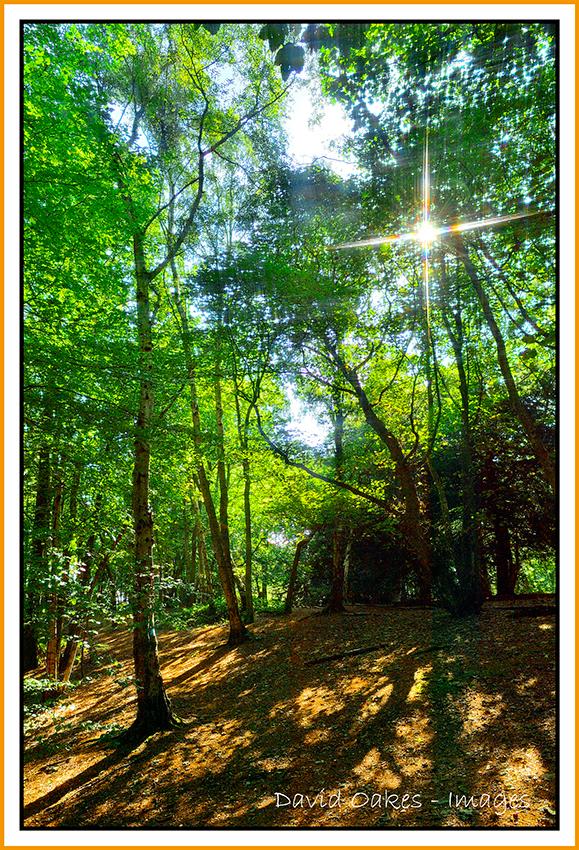 woodland-days-autumn-fool