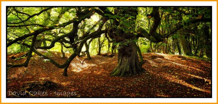 chestnut-canopy