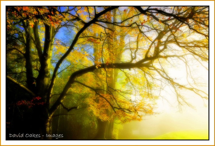 woodland-mistbb