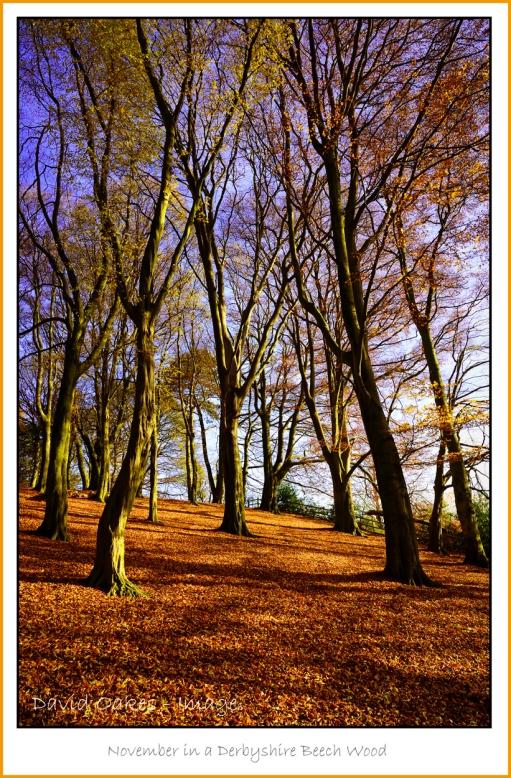 beech-wood-in-november-derbyshire