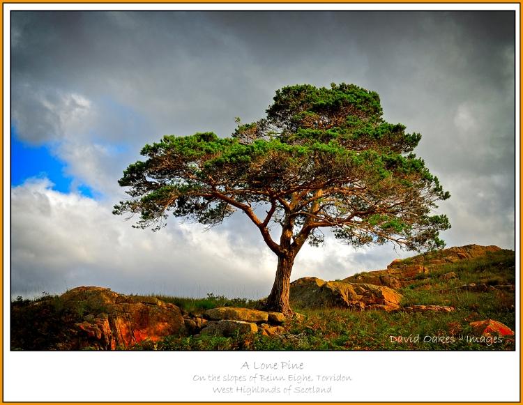 Loan-Pine.jpg