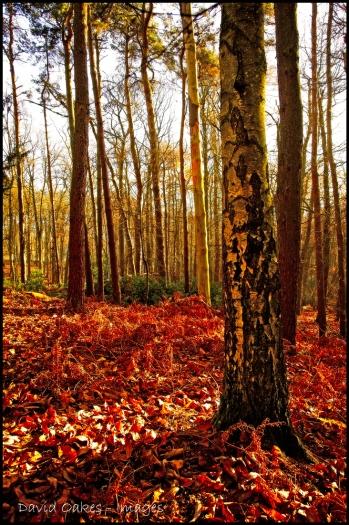 dawn-in-big-wood-copy-bb