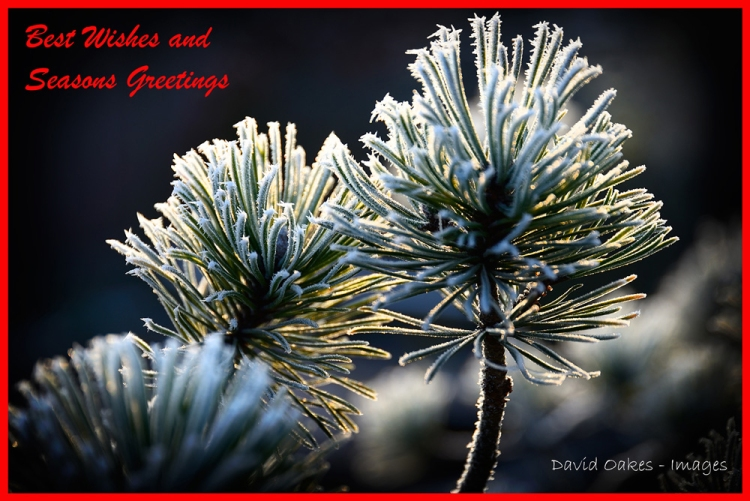pine-and-frost-seasons-greetings