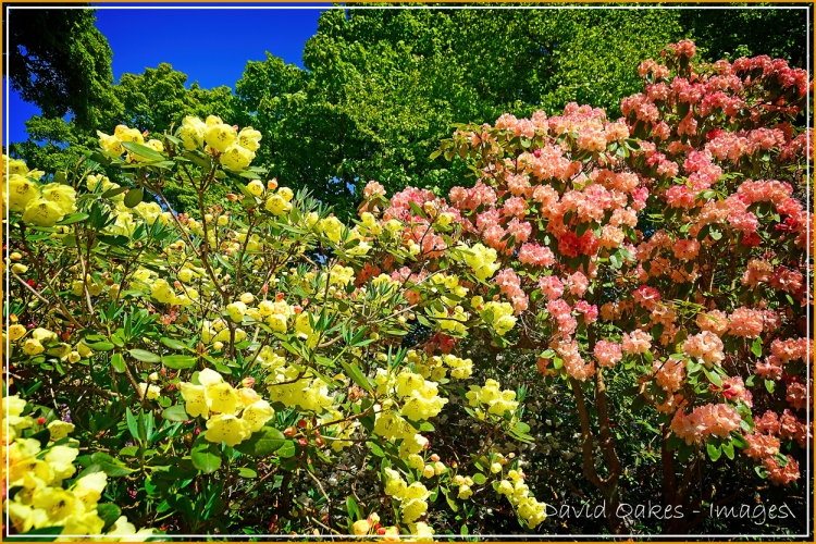 lea-gardens-04161