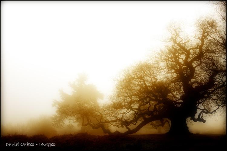 misty-again