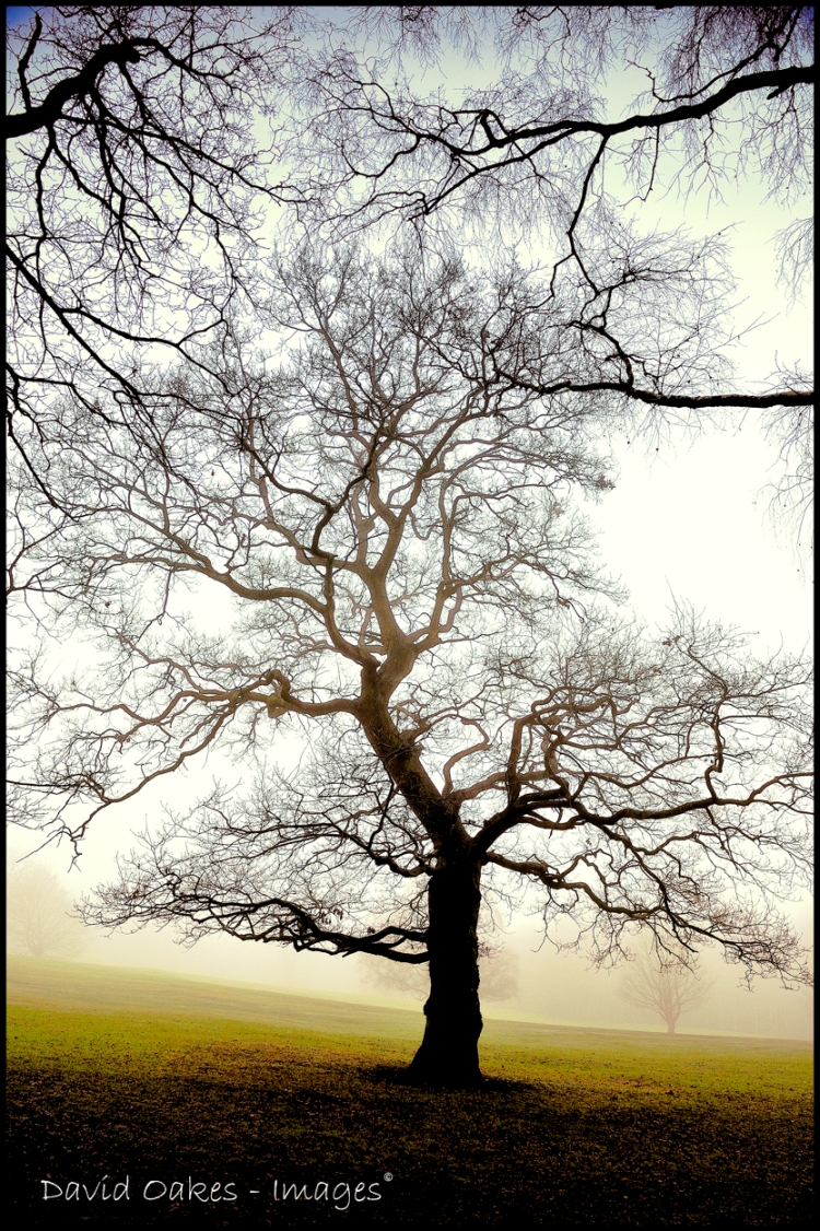misty-dawn
