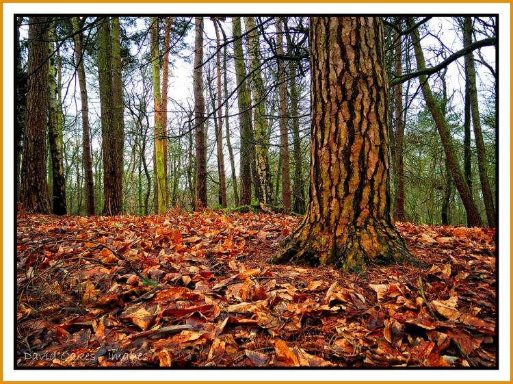 February Leaves.jpg
