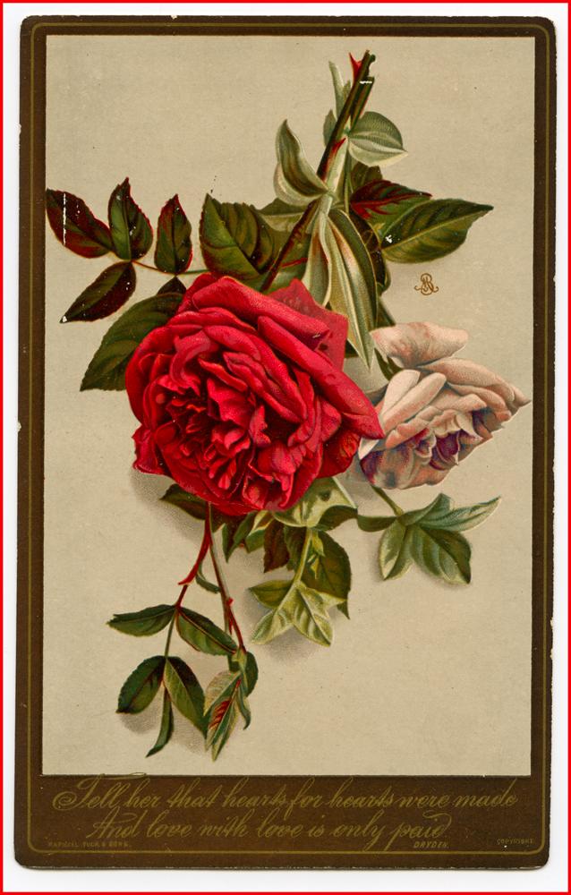 valentine-1091