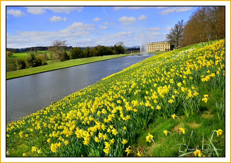 March-Daffs,-Chatsworth