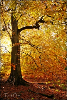 Autumns-Glow