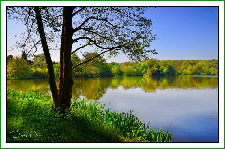 Allestree Lake