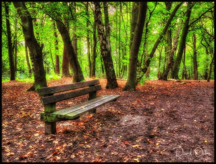 bench-in-woodsgg