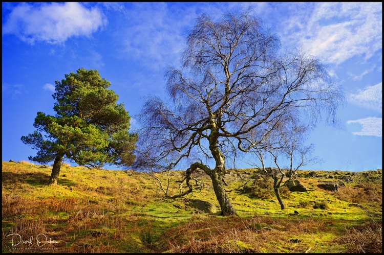 Contrast-on-the-moors