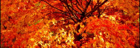 cropped-header-westonbirt-bb.jpg