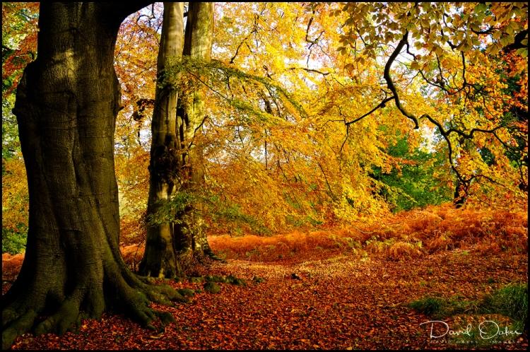November-colour a