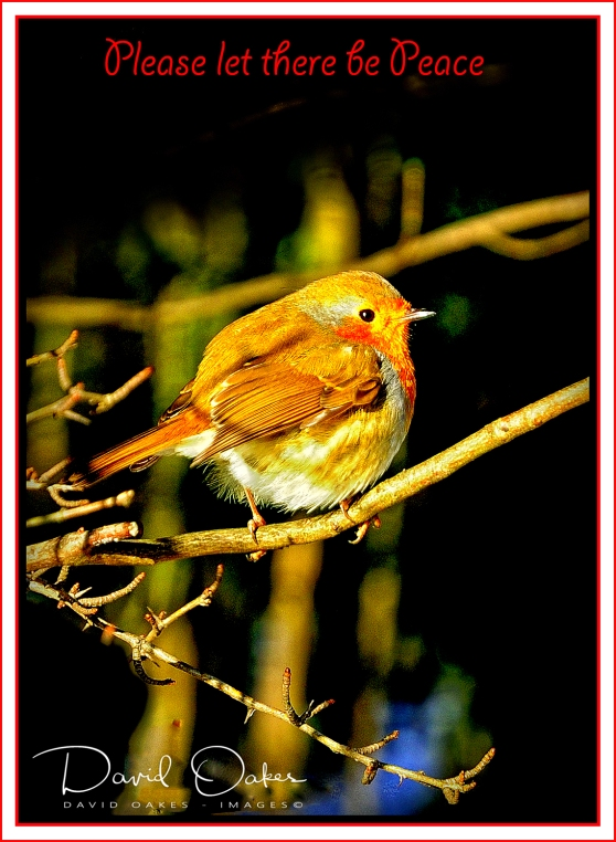 Robin Let there be Peace - Copy