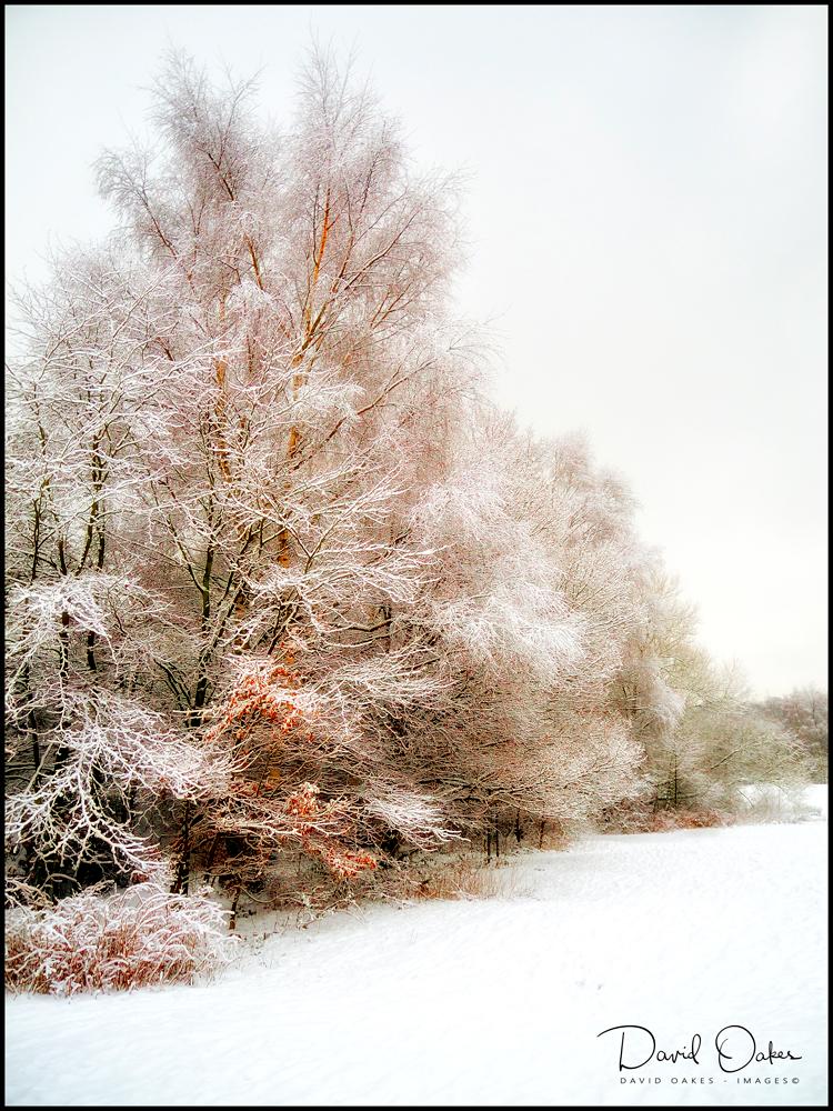 Allestree-Snows