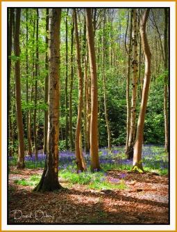 Spring-Woodlands