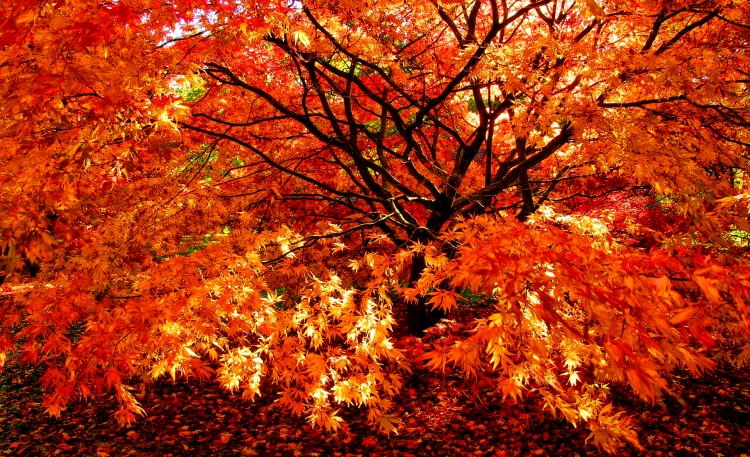Autumn Gold small
