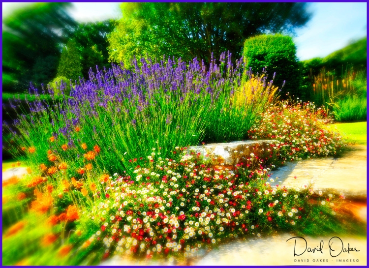 Lavender-Steps-web