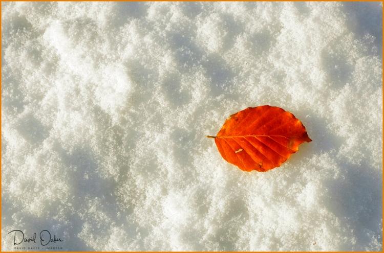 November------_0474