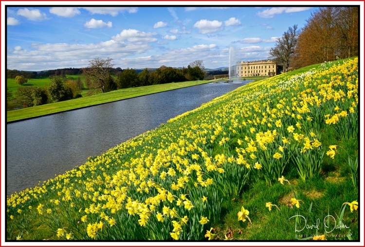 Chatsworth-Daffs.jpg