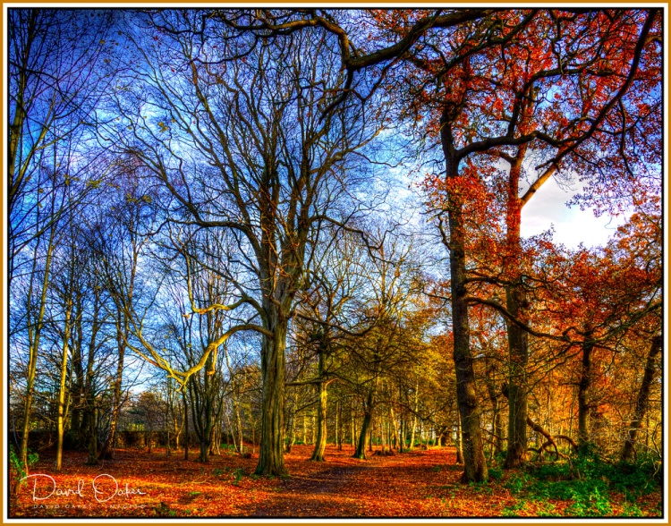 december-woods