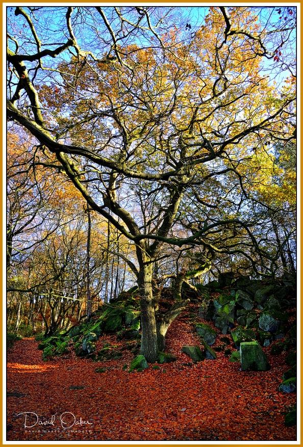 Oak Leaves.jpg
