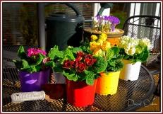 Gardening-Time