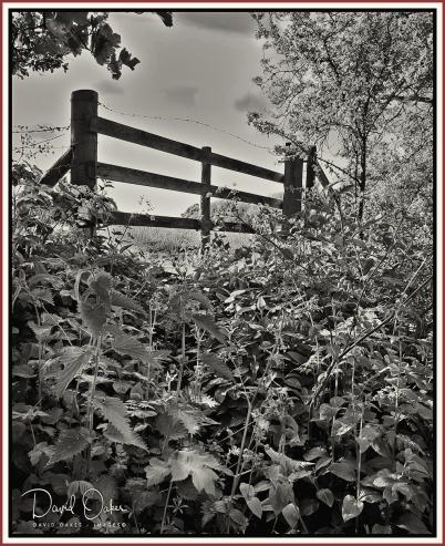 Farm-gate bw