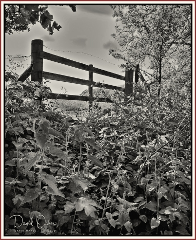 Farm-gate bw
